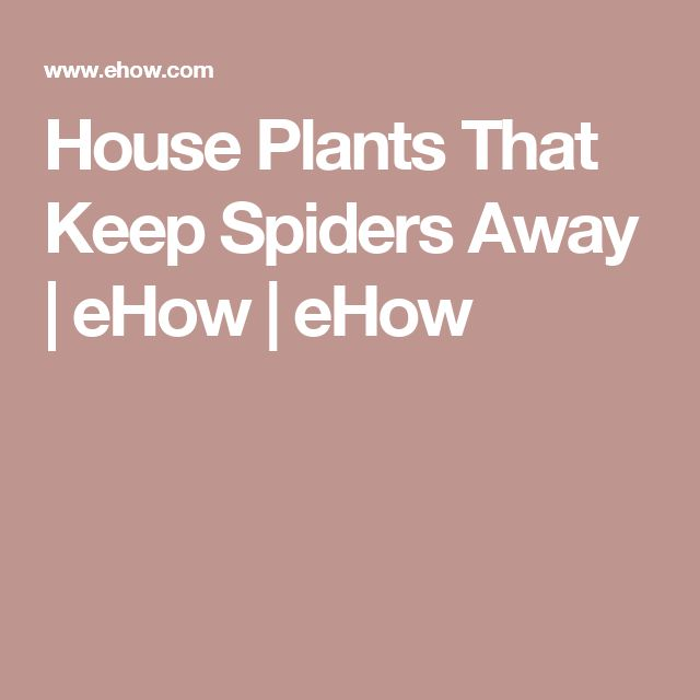 980 best images about herby stuff plants home cures on for Home remedies to keep spiders away