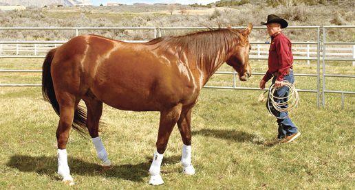 Body Language Basics for Your Horse