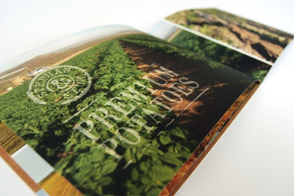 #potato farm #brochure #design    www.elevenct.co.za