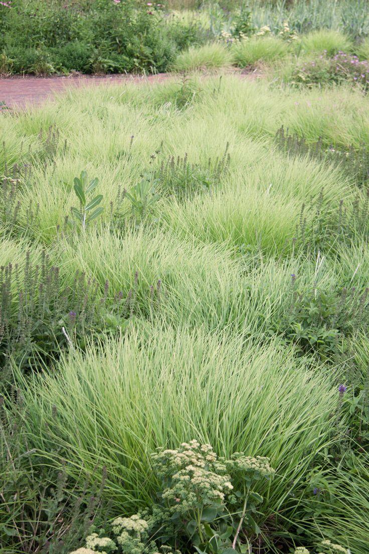 85 best piet oudolf gardens images on pinterest for Piet oudolf favorite plants