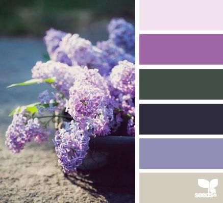 colores en macetas