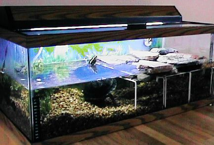 water turtle tank setup turtlepuddle org more ideas setup turtlepuddle ...