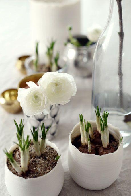 Wit als sneeuw maar pril als het voorjaar