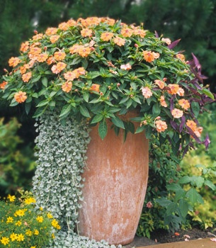 tall elegance for a semi shady spot 1 new guinea impatiens garden containercontainer flowersgardening - Flower Garden Ideas Illinois