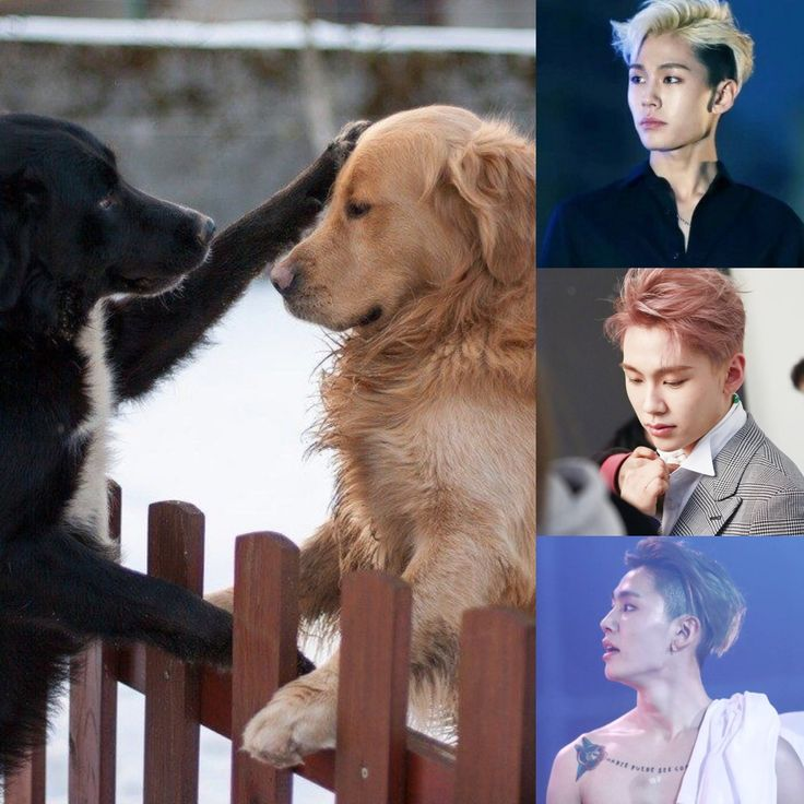 ChineseZodiac&KPOP // Dog // Ilhoon of BTOB