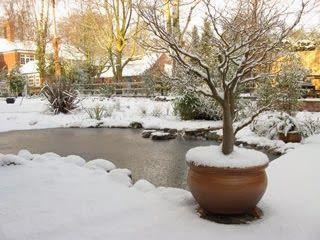 17 migliori idee su laghetti da giardino su pinterest for Laghetti nei giardini