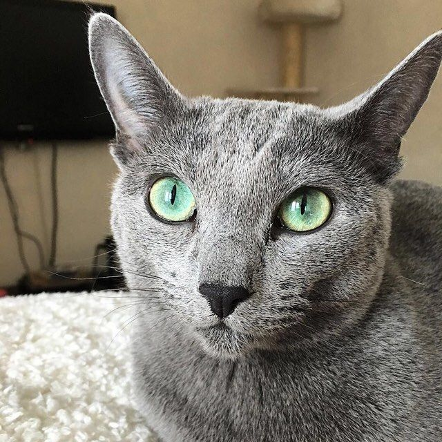 Eyes #cateyes #bestfriends #catstagram #gato #cat #instapets #catsofinstagram #catlover #instacats #happy #catlife #textgram #sexycurve #kitty #pose #lifestyle