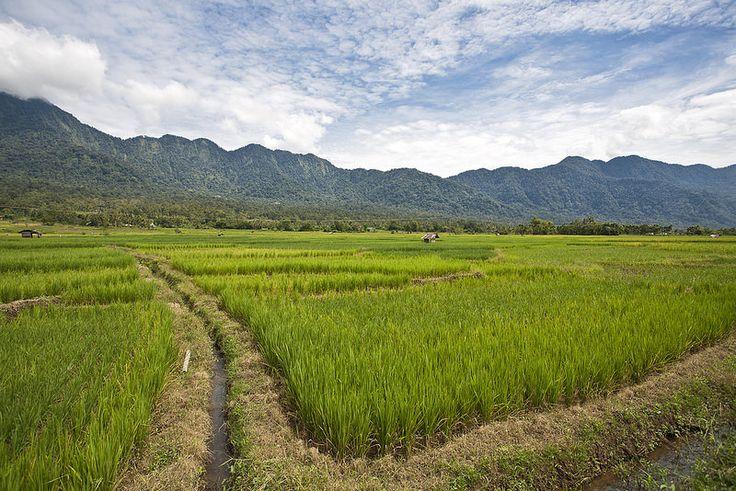 Rice Fields near the Lake Maninjau | par Hank888