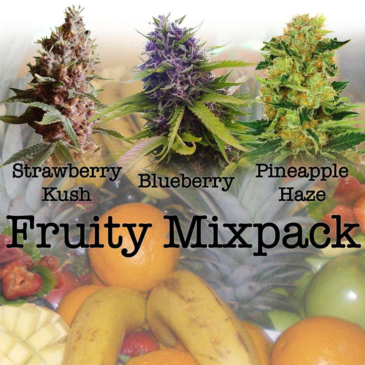 Fruity Mixpack includes Strawberry Kush, Pineapple Haze and Blueberry! (All Feminized) Flavors range from sweet to earthy Used to help various...