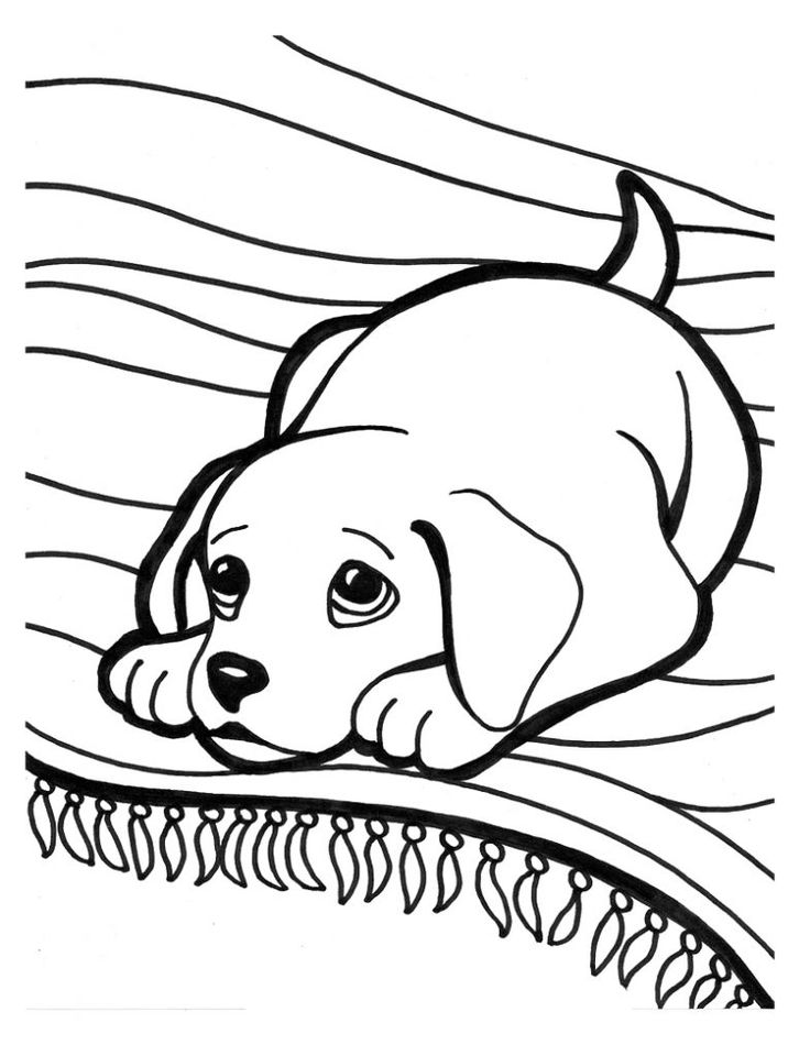 puppy coloring pages - Cute Husky Puppies Coloring Pages