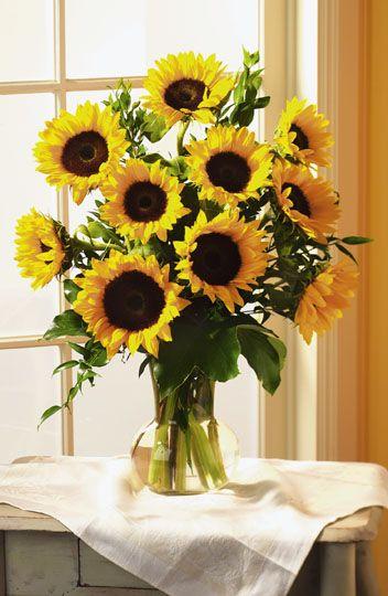 sunflowers are my favorite