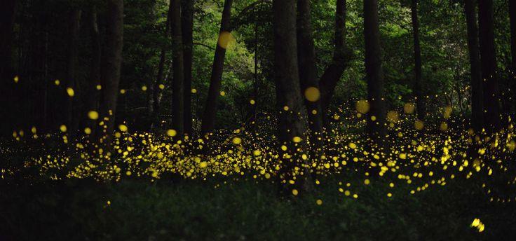 Participa en una rodada y campamento para ver un espectáculo de luz en el bosque Tlaxcala. temporada de lluvias –junio, julio y agosto– es el mejor momento para observar luciérnagas en el bosque de Nanacamilpa, Tlaxcala;