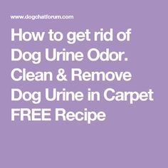 How to get rid of Dog Urine Odor.  Clean & Remove Dog Urine in Carpet FREE Recipe
