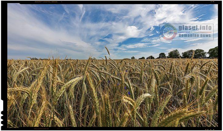 FAO instruiește inspectorii ANSA înManagementul Integrat de Protecţie a Plantelor Inspectorii din domeniul sănătăţii plantelor din cadrul subdiviziunilor teritoriale ale Agenţiei Naţionale pentru SiguranţaAlimentelor (ANSA)au beneficiat săptămâna curentă de instruire în metode de supraveghere şi depistare a organizmelor dăunătoare la culturile de câmp, pomicole, viticole şi în teren protejat. Sesiunile de instruire auloc în cadrul…