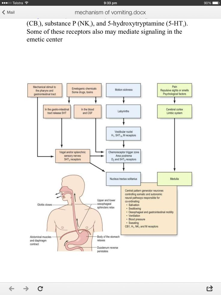 10 best pcp1 abdomen images on pinterest nurses diagram of parts of an inhaler diagram of vomiting