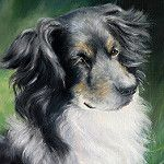Dog (Tom) - Oil study by Michelle Myers Art