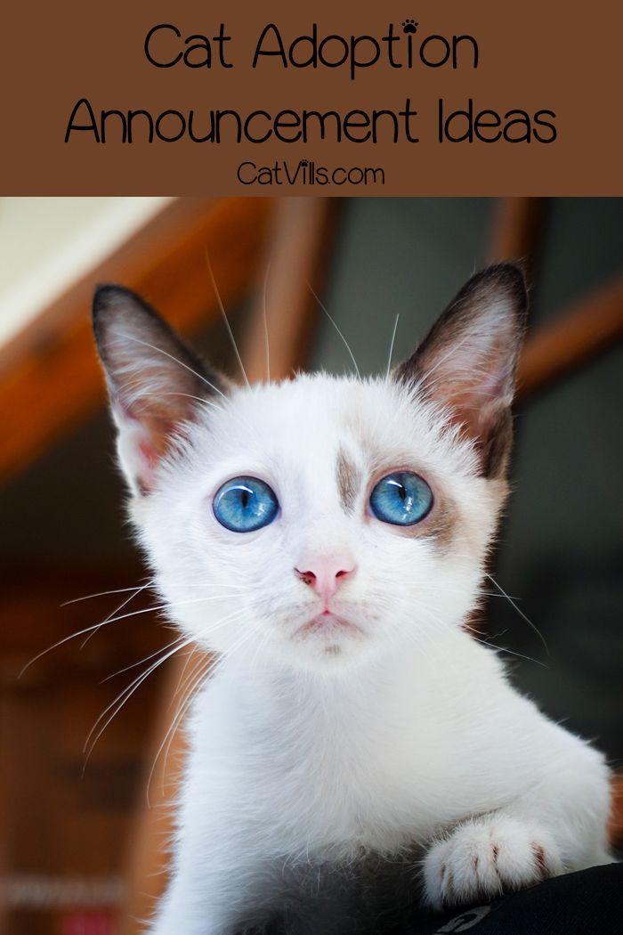 12 Hilarious and Unique Cat Adoption Announcement Ideas | Catvills