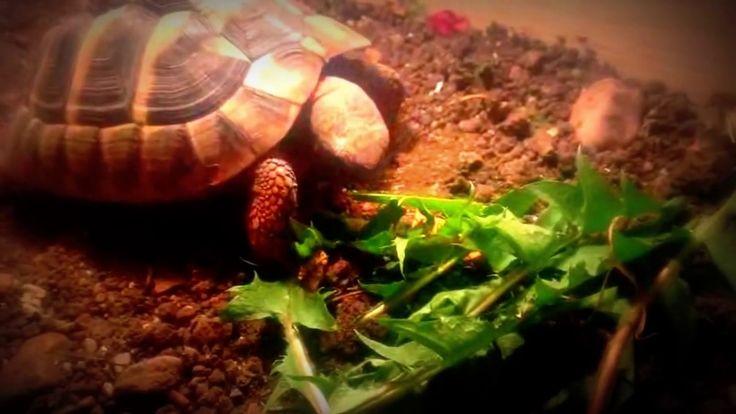 Patty-Sue nimmt die erste Mahlzeit nach der Winterstarre zu sich.