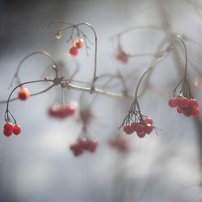 Fotograf Agnes Stuber -