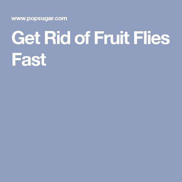17 Best Ideas About Fruit Flies On Pinterest Ants In