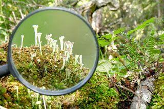 lecturaacompañada: Cabo de Hornos: laboratorio natural para investigar el cambio climático
