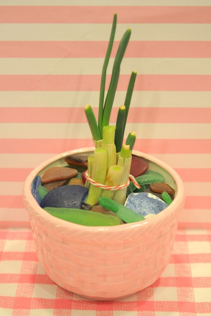 Interior designs medium size vertically growing onions growing onions - Holiday Sparkle How To Grow Green Onions