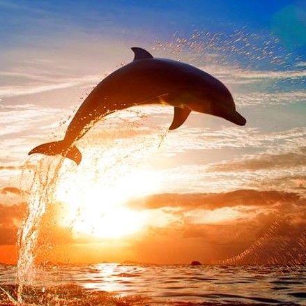 Les 25 meilleures id es concernant b b s dauphins sur for Art et cuisine tahiti