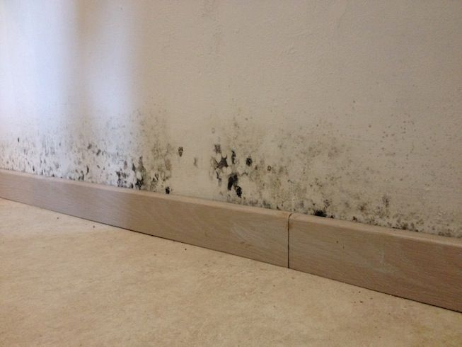 Feuchte Schwarze Grune Oder Graue Flecken An Wanden Tapeten