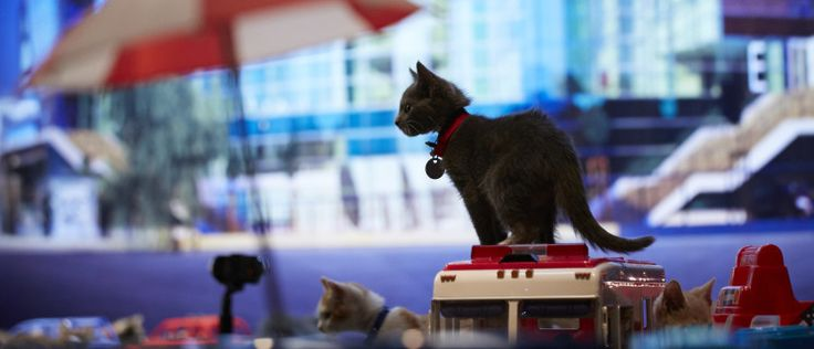videos for cats to watch 52 best kitten bowl images on 12434