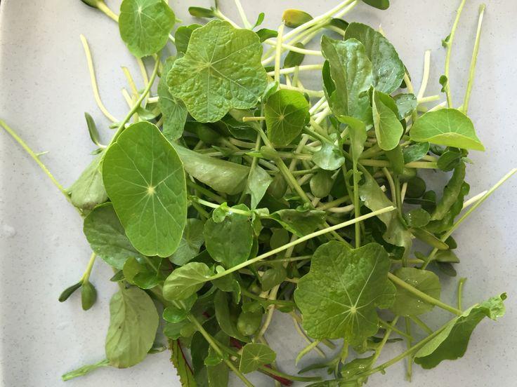 3.  Add #nasturtium leaves.