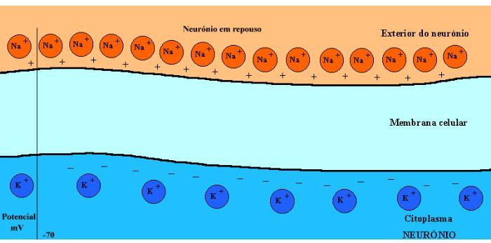 Sistema Nervoso: Introdução Células Impulso e Neuróglia