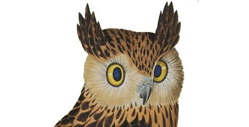 Tawny fish owl illustration 115062 490 250 owls for Owl fish store