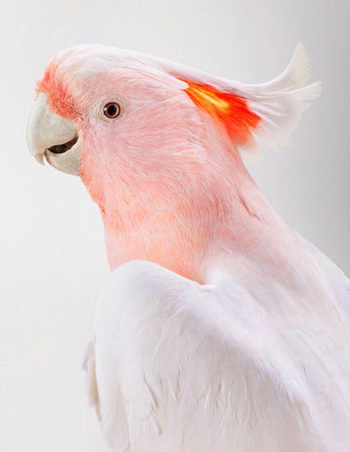 BIRD - by Leila Jeffreys