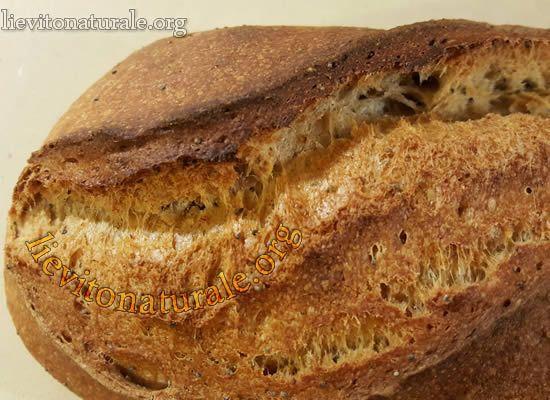 Pane comune con Lievito Naturale o Pasta Madre e Farina Macinata a Pietra