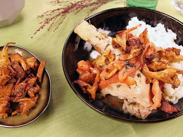 Pollo con pomodoro, erbe e pecorino - italienska gryta med kycklingklubbor, varma tomater och stekta kantareller.