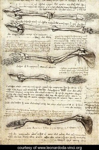 Arms - Leonardo Da Vinci - www.leonardoda-vinci.org