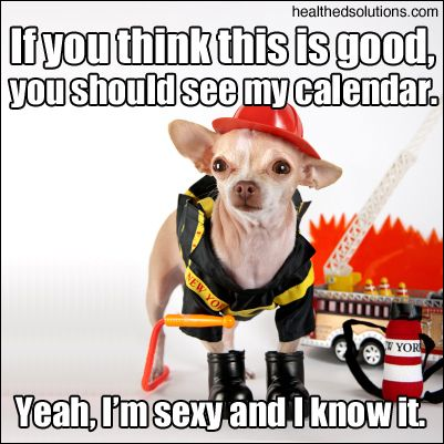 If you think this is good, you should see my calendar. #firefighters #chihuahua #funny