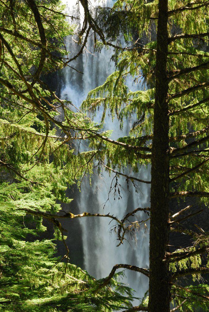 Salt Creek Falls through a forest of western hemlock (Tsuga heterophylla).- Salt Creek Falls