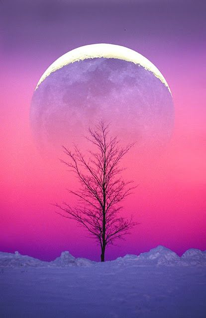 Ombre purple and pink moonlit winter sky ...