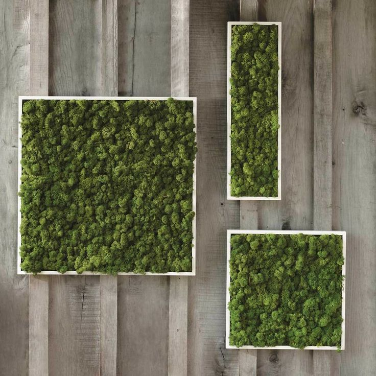 Moss Wall Art - VivaTerra.  We bought a couple squares for our living room, and we love how elegantly it brings a little cat-proof green into the space.  It's real moss!  Spritz with a little water if you think they're getting dry, otherwise they generally hold up just fine with the humidity.