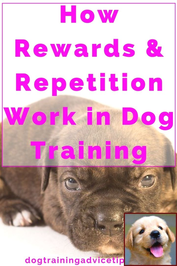 Dog Behavior Post Seizure And Dog Behavior Is Changing Training