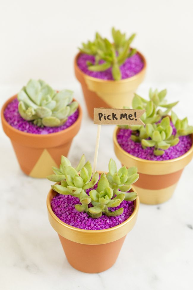 DIY colorful potted succulent wedding favors
