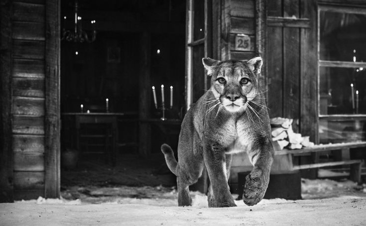 The Landlord door David Yarrow - Te huur/te koop via Kunsthuizen.nl