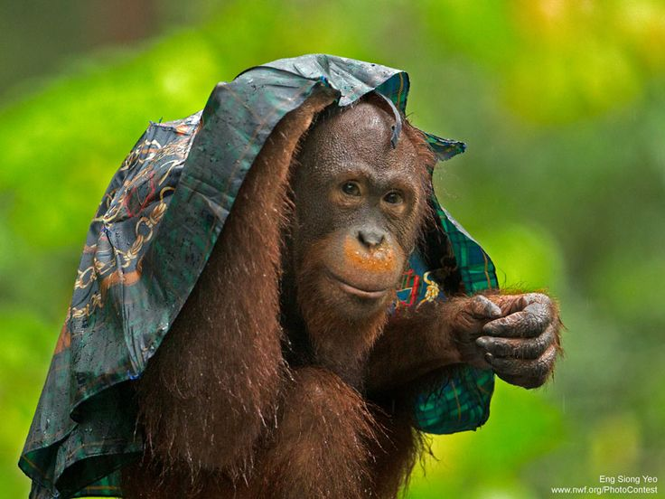 Animals Caught In The Rain Photo Gallery Nature