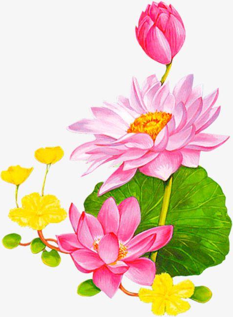 Lotus Lotus Leaf Cartoon Decoration Lotus Clipart Cartoon Clipart
