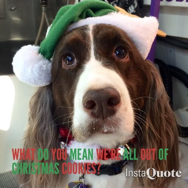 792 Best Christmas Dogs Images On Pinterest English