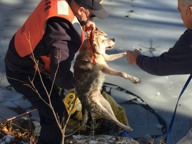 """12/22/16 A 19-year-old dog had to be rescued this week after she wandered onto an icy pond in Fairfield, Connecticut, and got trapped. According to UPI News, the elderly shepherd mix, named """"Delilah,"""" found herself in harm's way on Monday morning. Firefighters with the Fairfield Fire Department responded to the frigid pond near 130 Robert Lane …"""