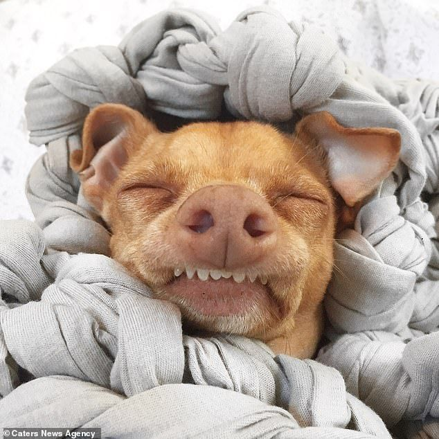 Goofy Looking Dog Becomes Latest Internet Star Cute Baby Dogs