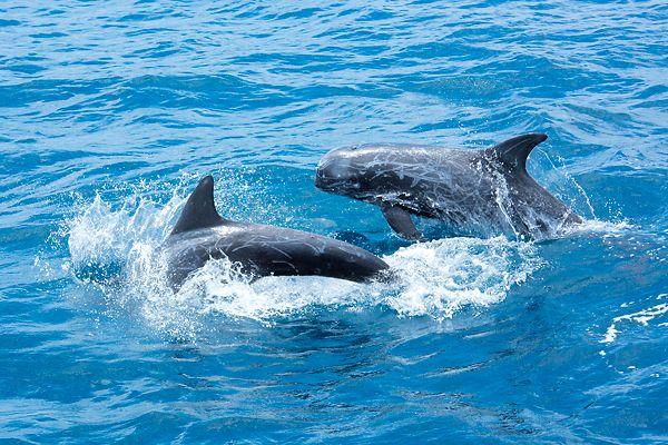 野生のクジラをさがす旅。和歌山でホエールウォッチングに挑戦!2016