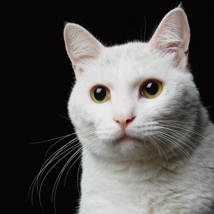 jb make 收藏于 cats